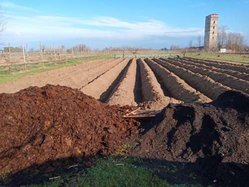 campo d'asparagi